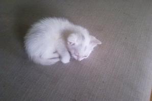 chat du chalet