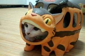 cosplay n'animaux !