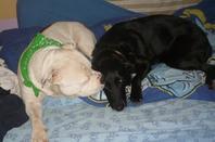 ma chienne et le chien du colégue
