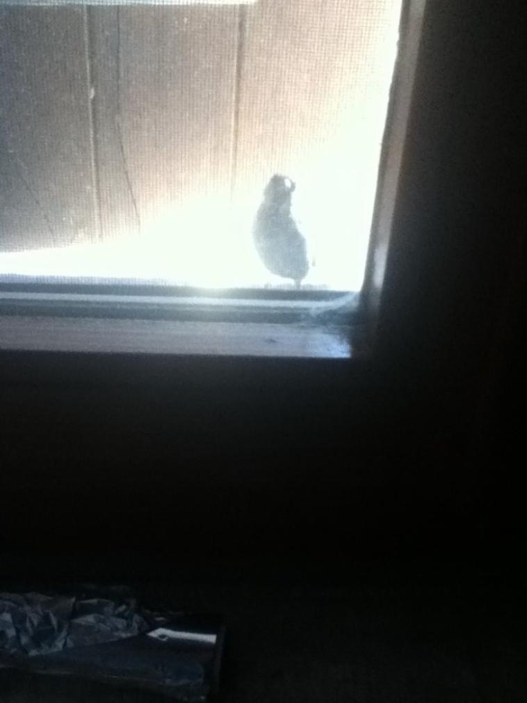 un oiseau !