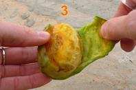 "Cactus fruit / ""Taknarit"""