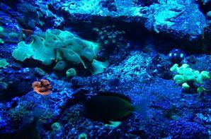 -_- Aquarium -_-