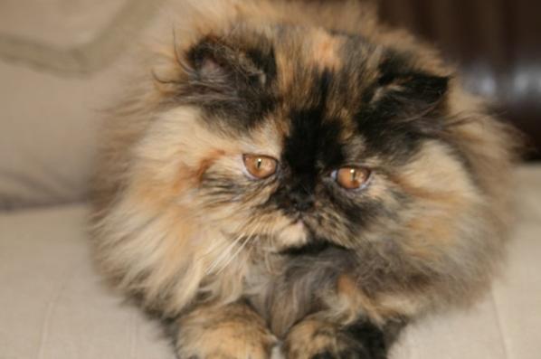 Très jolie petite Lolita n'ai plus disponible, elle est parti vivre à Madagascar