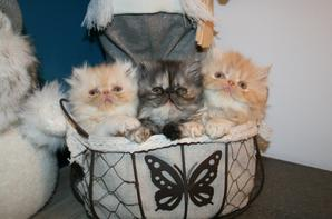 1 2 3 Petits chatons, ne sont ils pas mignons !