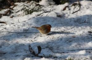 Oiseaux en hiver (1)