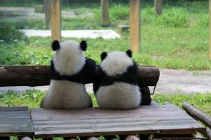 How lovely the twins brother and sister are! Featuring Yu Bao and Yu Bei