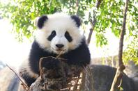 Lovely pandas wish you happy everyday!