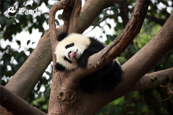 Qi Guo is the cutest sleepaholic, definitely!