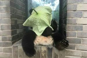 New hat, is it beautiful?