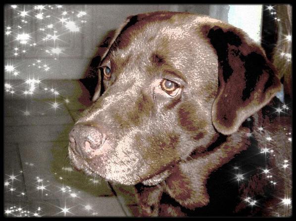 Dur dur de faire confiance à l'être humain, même les aveugles préfèrent se faire guider par des chiens