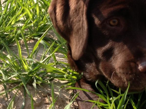 Dur dur de faire confiance à l'être humain, même les aveugles préfèrent se faire guider par des chiens ♥