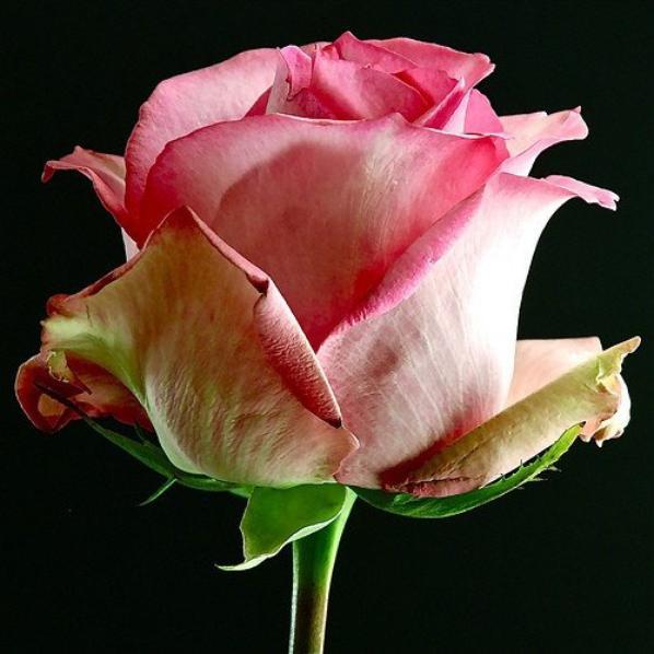 ma fleure adore