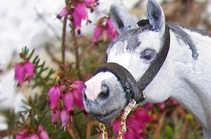 Le Centre Equestre de la Plaine