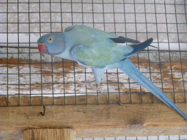 collier opaline cobalt turquoise