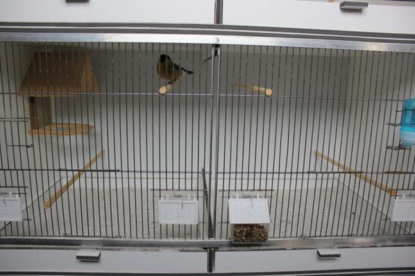 Kweekkooien/ Cages d'élevage