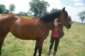 j'aime les chevaux !