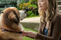 Quoi de plus fort que l'amour d'un chien ? ♥