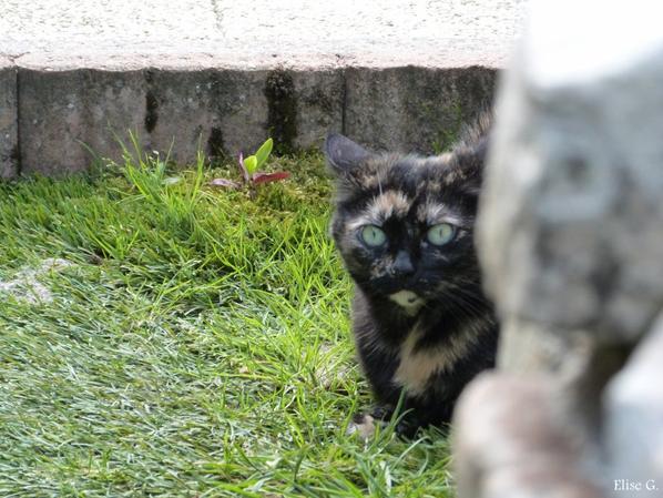 « L'idéal du calme est dans un chat assis. » de Jules Renard