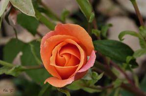 « Une fleur est un être entièrement poétique. » de Novalis