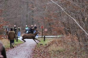 chasse du 26/12/2012