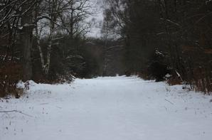 petite ballade sous la neige