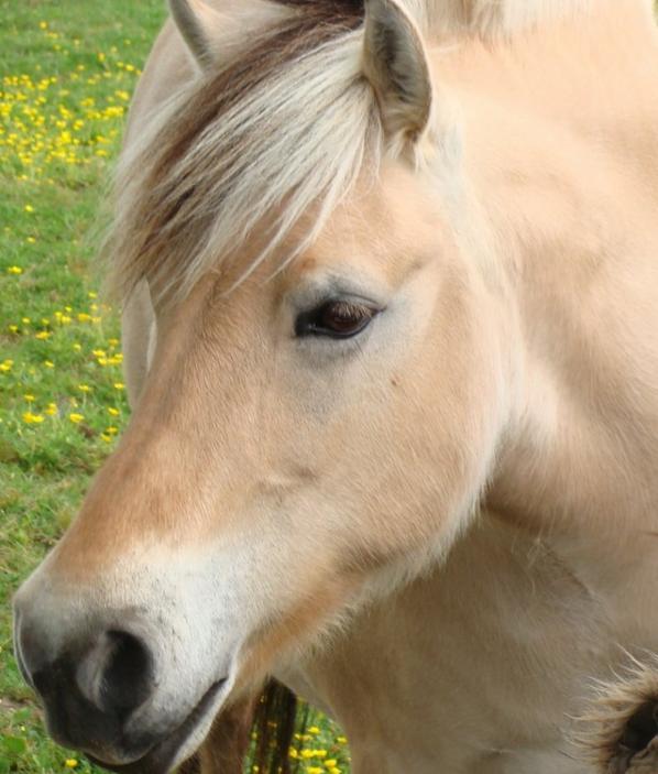 Petites photos à l'équitation...