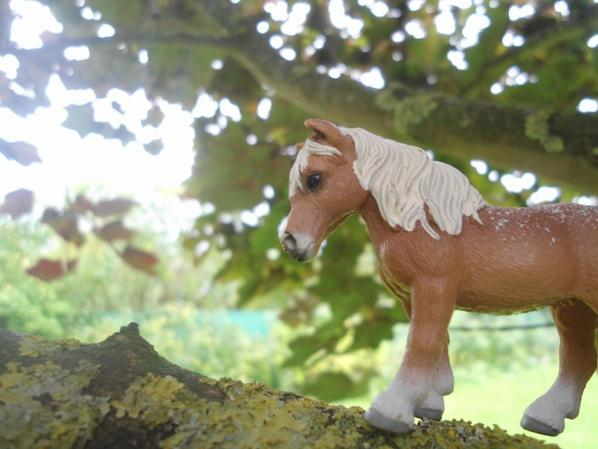 Shooting Photo Schleich