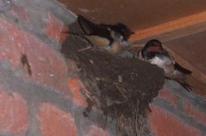 Les oiseaux du bonheur  ont élus domicile dans  mon entrée