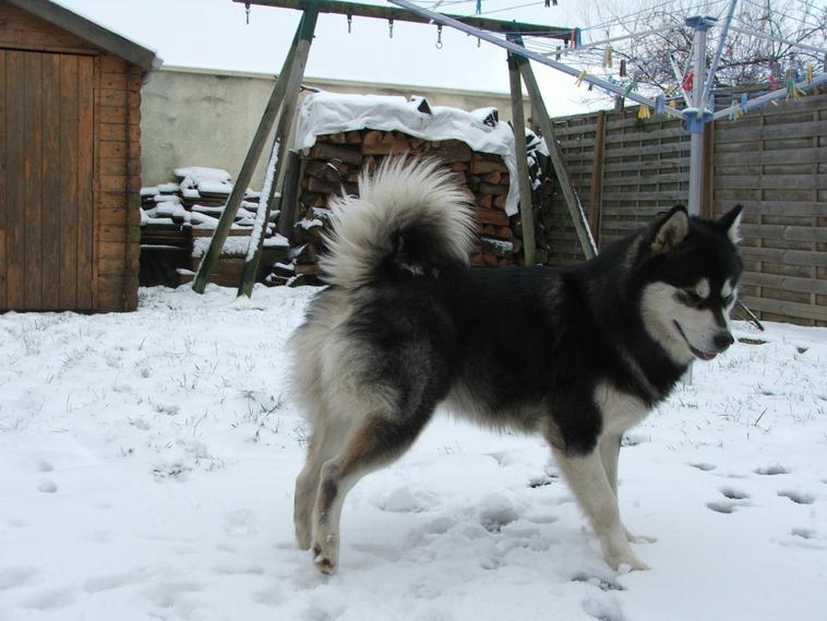 En exploration dans la neige qui vient de tomber!!