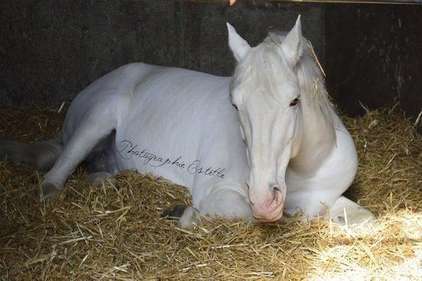 Album  n°2 Equin : Mabrouk, le cheval de Mr Jaque Chirac.
