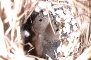 Des nouvelles de mes oiseaux