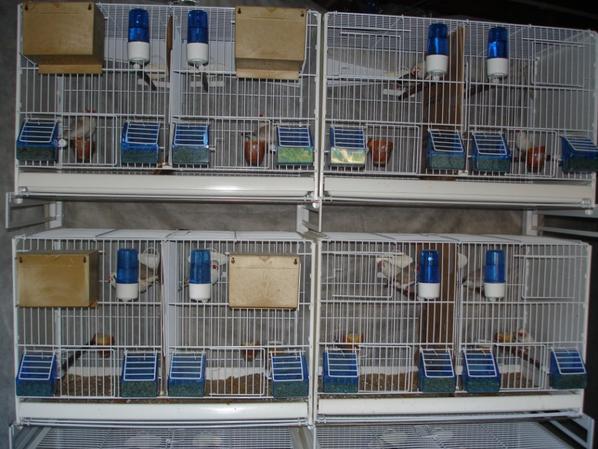 Deuxième lot de cages.