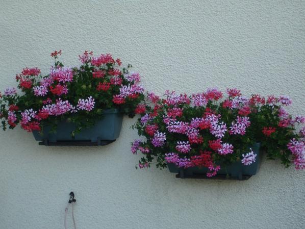 Fleurs suite.