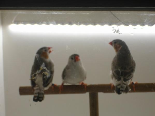 Autres oiseaux.
