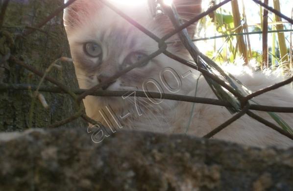 Mon chat ...
