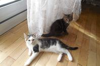 Mes petits papous ! Figgy et Sanka ^^