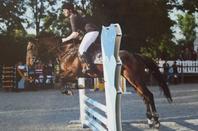 Le cheval nous apprend ce qu'est la domination de soi.