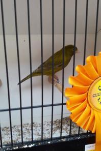 Lens 2017  premier au classement général sur 7 oiseaux   652 pts