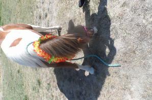 le poney au lac ... le plus beau <3