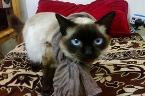MY LOVELY CAT - MIMI -