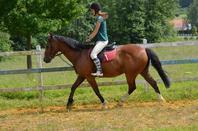 De ce spectacle émouvant, qui force le c½ur et remue les entrailles, se dégage comme l'essence de toute harmonie. Ils sont deux, ne font qu'un, dans un même mouvement, une même légèreté. dans un équilibre où se répondent la retenue et l'abandon, la souplesse et la fermeté, la puissance et la délicatesse. C'est une danse où le cheval n'a plus sa tête. Un esprit l'habite. Où le cavalier n'a plus de jambes. Il va au pas, il trotte, il galope. C'est presque une musique que rythment les sabots tintant.