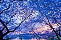 La beauté est partout dans l'Univers.