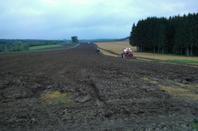 Plantage de maïs dans les Ardennes (2)