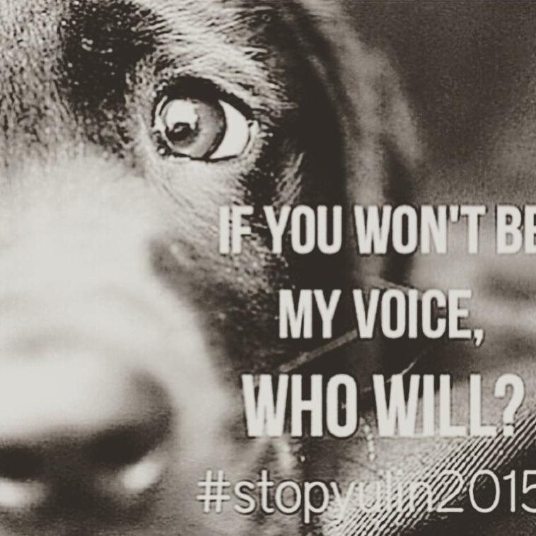 Hors sujet mais très important #StopYulin2015