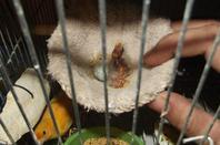 中华人民共和国河北省定州市王刚雀鸟繁育工作室