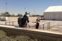 CSI5* Doha - Kevin Staut & Taran de la Pomme - barème A, 1,50 m - 27 mar...