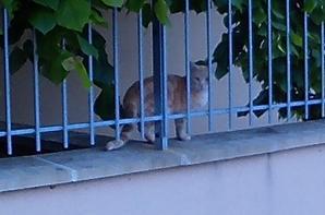 et voila la chatte de la bibliotéque !