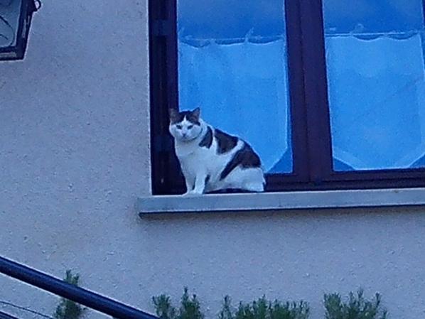 voila deux chats pret d'une impasse