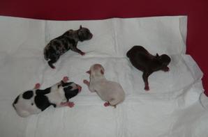 4 mâles sont nés le 29/09/2013
