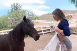 Une copine et son cheval ......